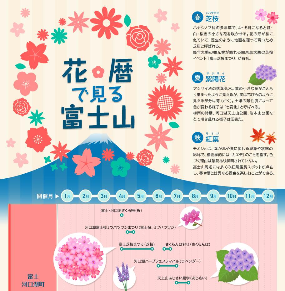 図解1分でわかるシリーズ「花歴で見る富士山」(インフォグラフィック)